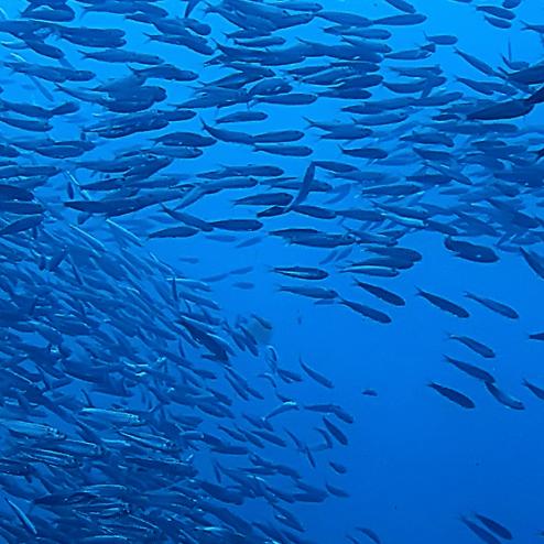 banc poisson - Home